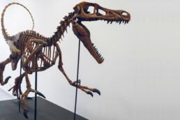 3D gedruckter Dinosaurier von voxeljet